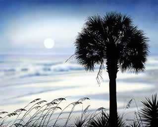 Coastal Palmetto an acrylic painting by wildlife artist Danny O'Driscoll