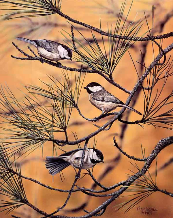 Autumn Chickadees by Wildlife Artist Danny O'Driscoll