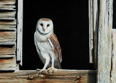 Country Living Barn Owl an acrylic painting by wildlife artist Danny O'Driscoll