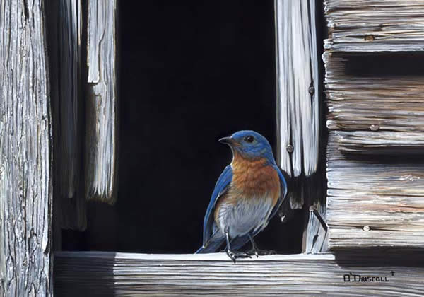 Blue and Gray an acrylic painting by wildlife artist Danny O'Driscoll