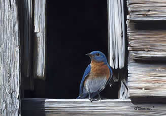 Blue and Gray an acrylic painting of a bluebird by wildlife artist Danny O'Driscoll