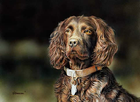 Proud Breed-Boykin an acrylic painting by wildlife artist Danny O'Driscoll