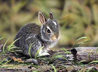 Bunny-Youngster--t_002.jpg