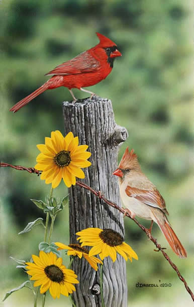 Cardinals and Blackeyed Susans an acrylic painting by Wildlife Artist Danny O'Driscoll