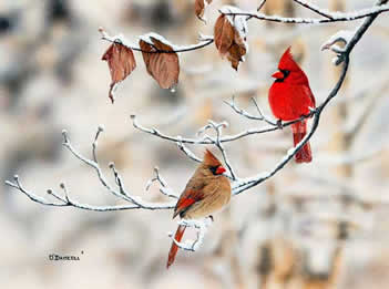 Winter Pair-Cardinals an acrylic painting by wildlife artist Danny O'Driscoll