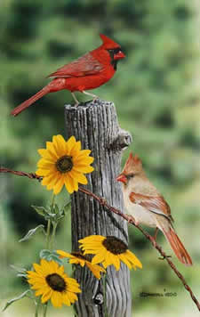 Cardinals and Black eyed Susans acrylic painting by Wildlife Artist Danny O'Driscoll