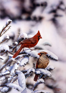 Winter Beauties - Cardinals