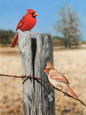 Cardinals Out in the Field an acrylic painting by wildlife artist Danny O'Driscoll