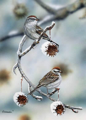 Chipping Sparrows an acrylic painting by wildlife artist Danny O'Driscoll