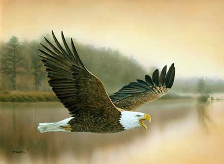 Dawns Early Light Bald Eagle an acrylic painting by wildlife artist Danny O'Driscoll