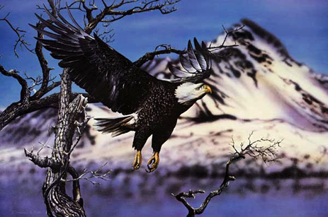 Bald Eagle in Flight an acrylic painting by wildlife artist Danny O'Driscoll