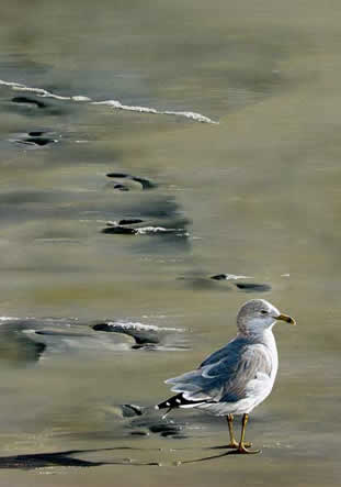 Footprints an acrylic painting by wildlife artist Danny O'Driscoll