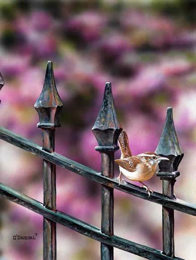 Garden Gate Wren an acrylic painting by wildlife artist Danny O'Driscoll