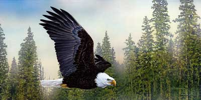 Going Solo an acrylic painting by wildlife artist Danny O'Driscoll