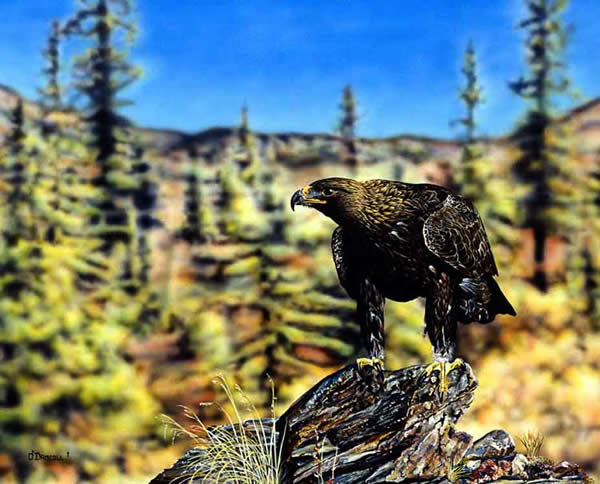 Golden Eagle an acrylic painting by wildlife artist Danny O'Driscoll
