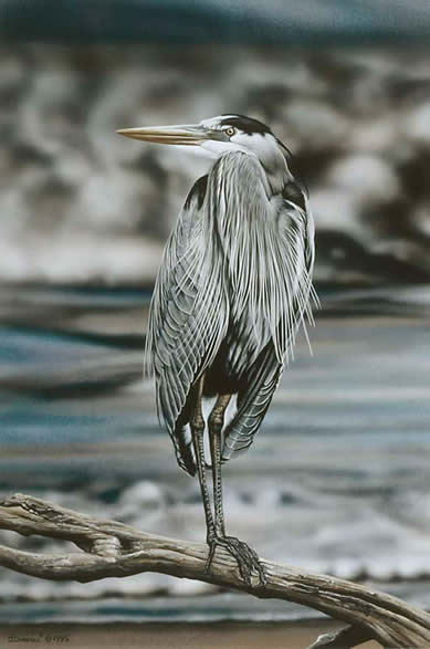 Great Blue Heron an acrylic painting by Wildlife Artist Danny O'Driscoll