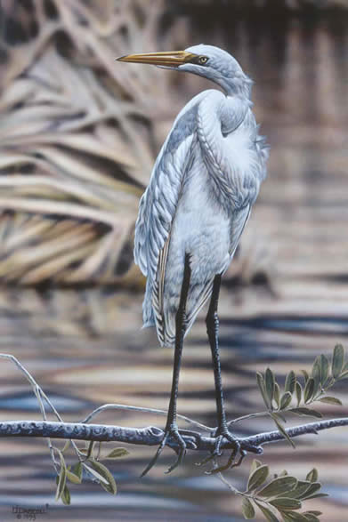 Great Egret an acrylic painting by Wildlife Artist Danny O'Driscoll