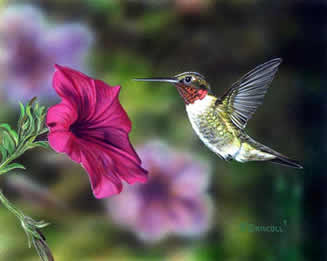Hummer and Petunia 4 an acrylic painting by wildlife artist Danny O'Driscoll