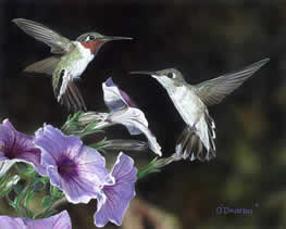 Hummers and Petunias an acrylic painting by Wildlife Artist Danny O'Driscoll