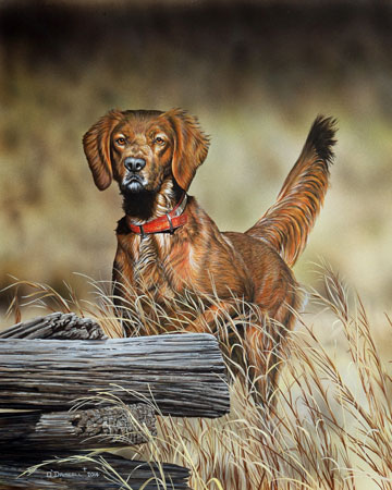 Irish Setter-Claire an original acrylic painting by Wildlife Artist Danny O'Driscoll