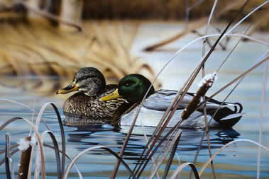 Mallards on the Water an acrylic painting by wildlife artist Danny O'Driscoll