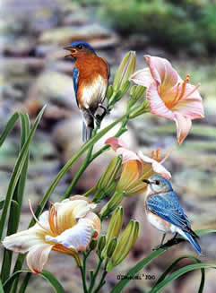 Morning has Broken Bluebirds an acrylic painting by wildlife artist Danny O'Driscoll