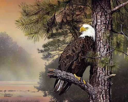 Morning sentinal an american bald eagle by wildlife artist Danny O'Driscoll