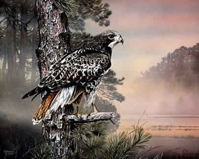 Morning Watch an acrylic painting by wildlife artist Danny O'Driscoll