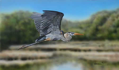 Peaceful Morn-Great Blue in Flight an acrylic painting by wildlife artist Danny O'Driscoll
