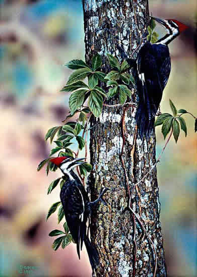 Pileated Woodpeckers an acrylic painting by wildlife artist Danny O'Driscoll