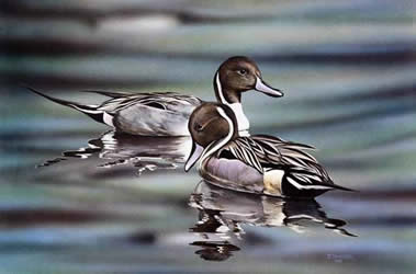 Pintails an acrylic painting by wildlife artist Danny O'Driscoll