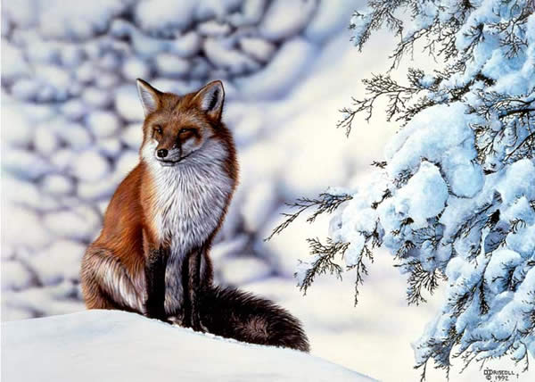 Red Fox an acrylic painting by Wildlife Artist Danny O'Driscoll