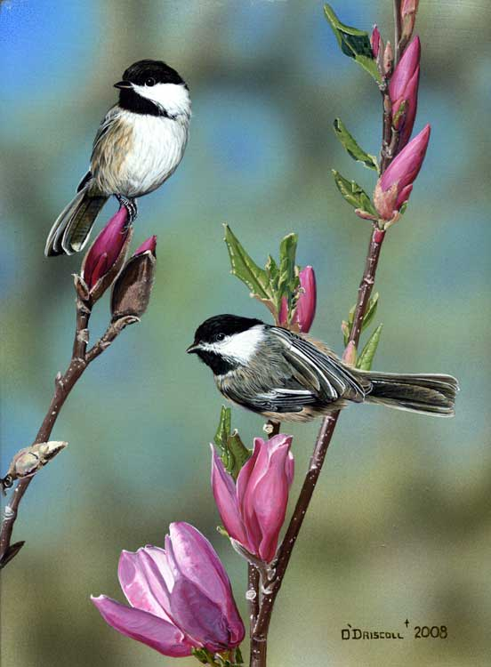 Spring Fancy Chickadees- Acrylic painting by Wildlife Artist Danny O ...: www.dannyodriscoll.com/SpringFancy-Chickadees...