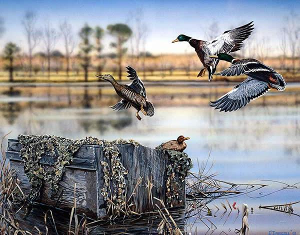 The Box Mallards landing an acrylic painting by wildlife artist Danny O'Driscoll