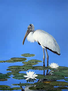 Woodstork an acrylic painting by Wildlife Artist Danny O'Driscoll