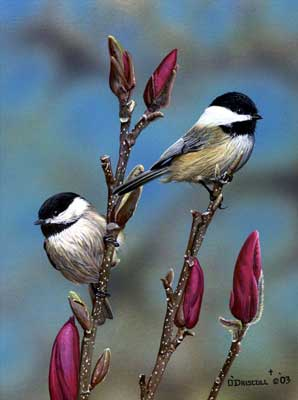 """Spring Arrival"" - Chickadees Print by Wildlife Artist Danny O'Driscoll"